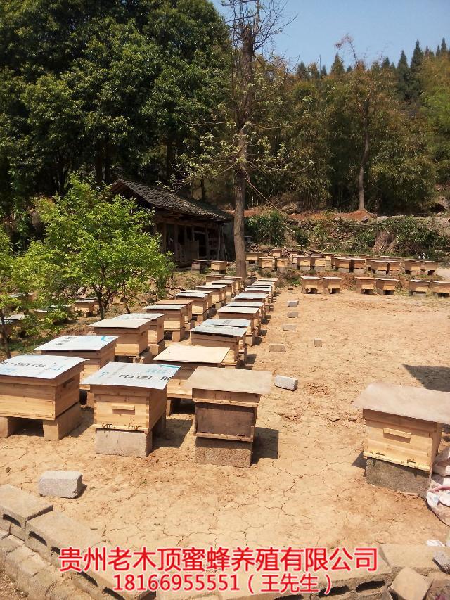 毕节蜜蜂养殖