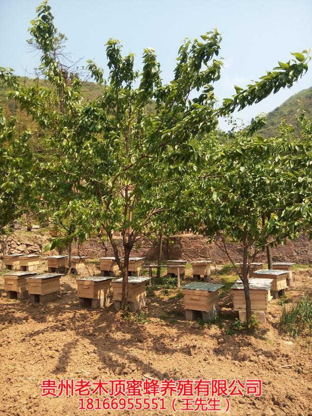 安顺蜜蜂养殖