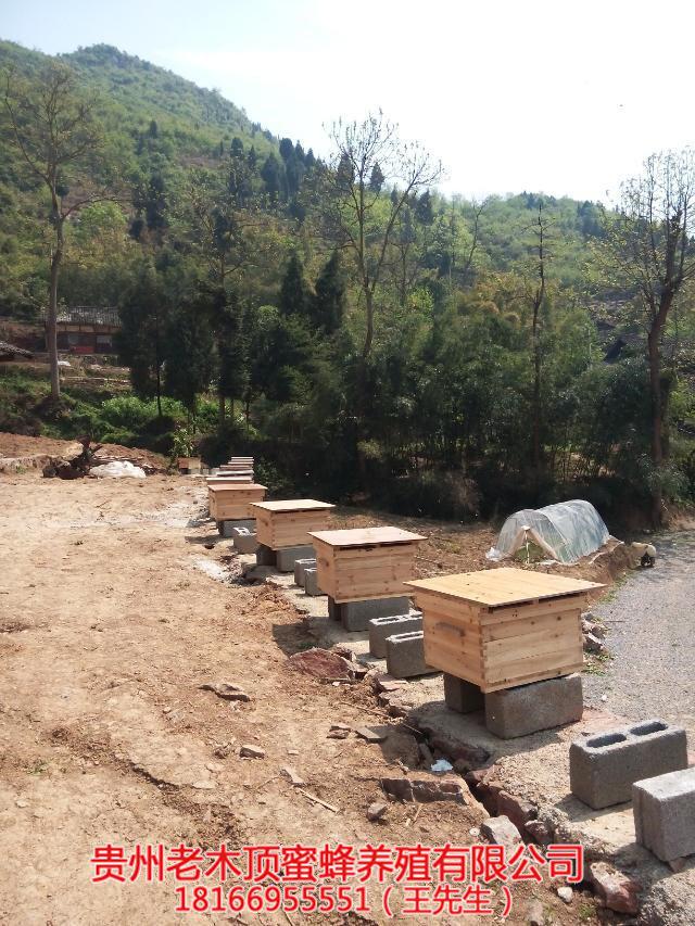 六盘水蜜蜂养殖