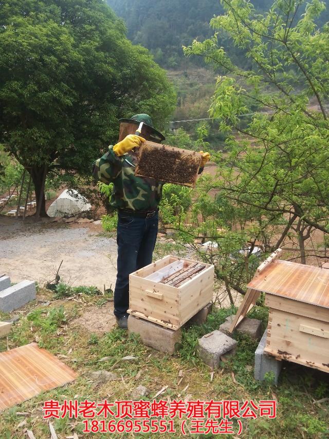 兴义蜜蜂养殖
