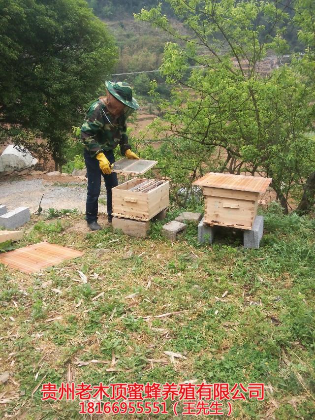 都匀蜜蜂养殖