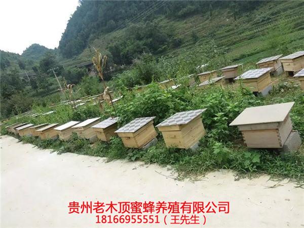 兴义土蜂出售