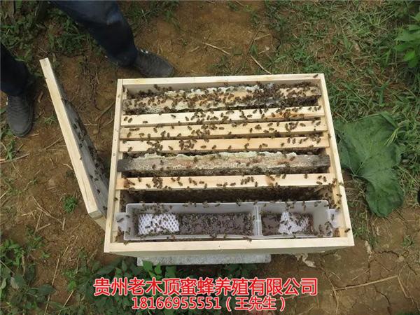 <文章>正宗土蜂蜜的介绍 细说土蜂蜜不结晶的原因