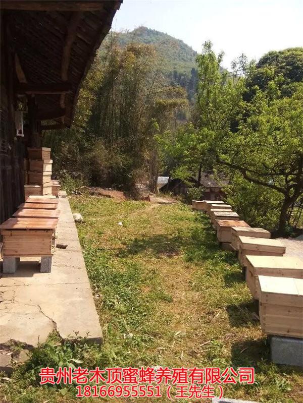 铜仁土蜜蜂养殖场