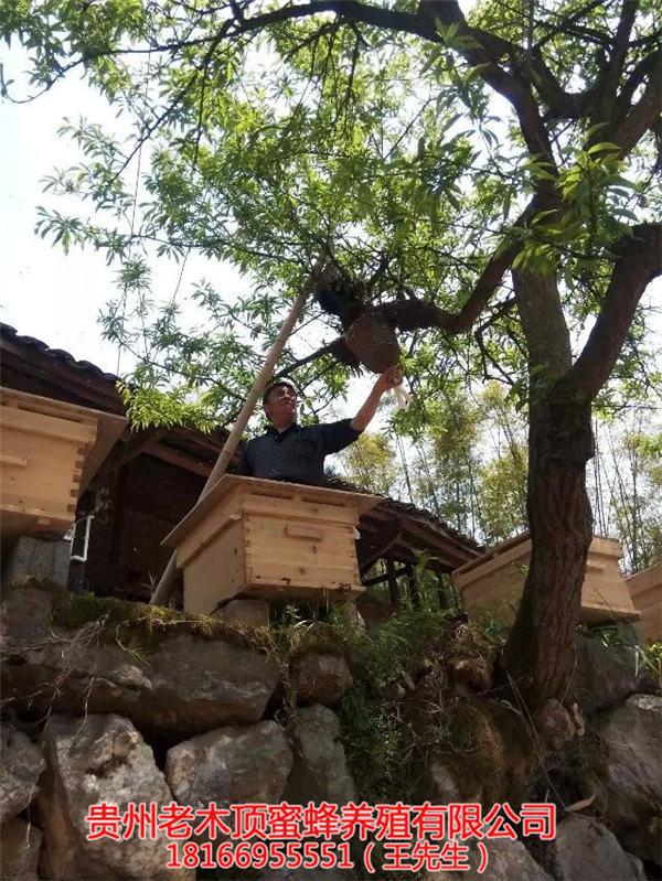 毕节土蜜蜂养殖场