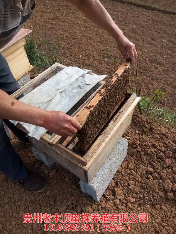 都匀土蜜蜂养殖场