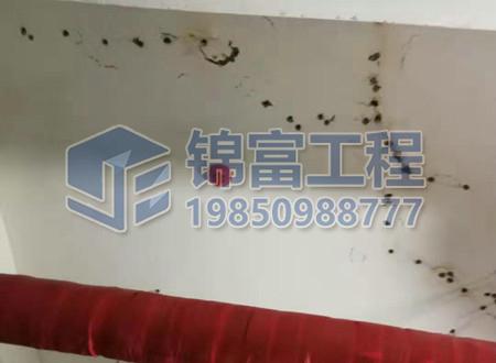 房屋墙面裂缝堵漏