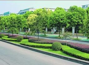 公路绿化养护价格