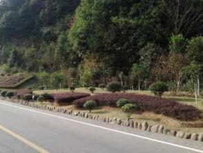 绿化养护公路