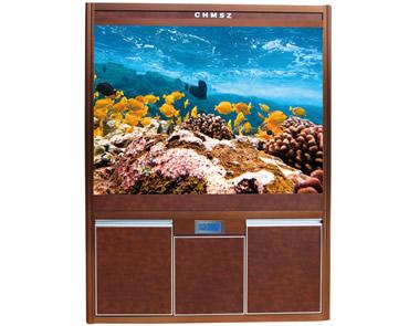 【图文】水族箱中加点儿水草增添活力_养鱼给人带来快乐