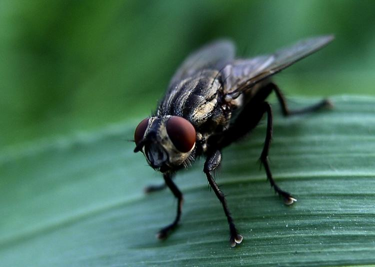 苍蝇太多怎么办