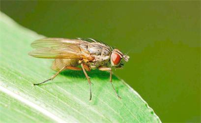 怎么快速消灭室内虫子