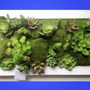 多肉植物组