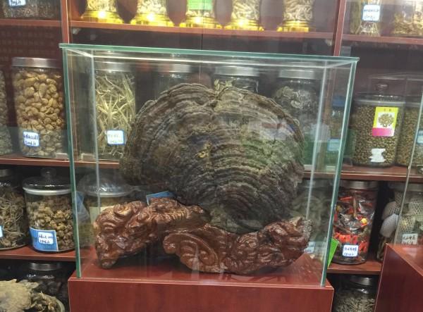 广西天然野生灵芝销售