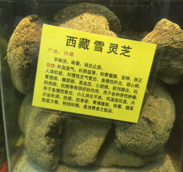 广西野生灵芝品种