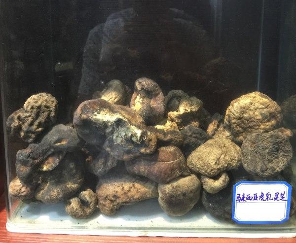 广东野生灵芝供应商