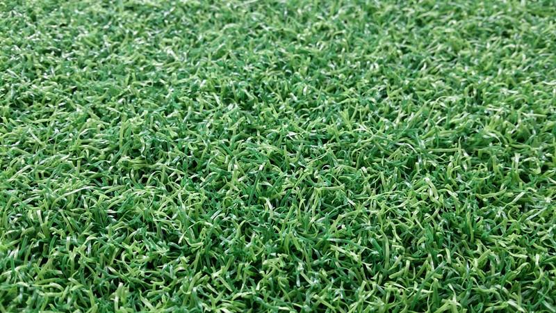 门球场曲草