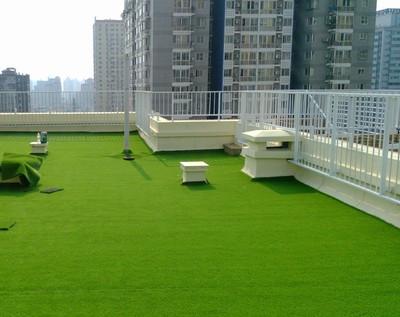 屋顶休闲草