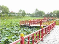 信阳防腐木护栏