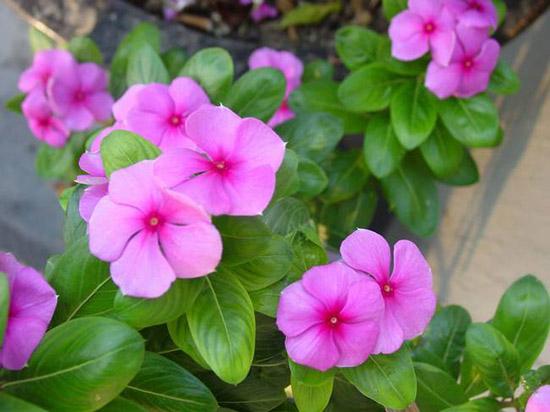 花卉种苗供应