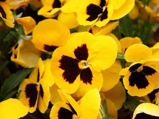 景观花卉种子育苗