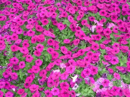 景观花卉种子价格