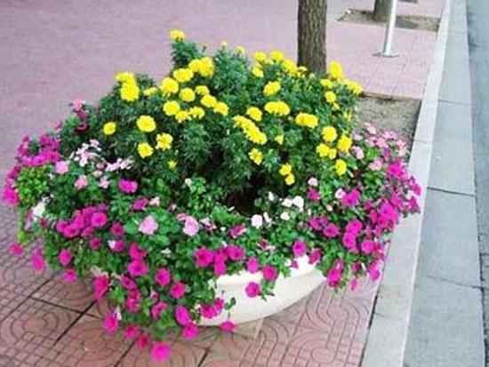 花卉种子求购