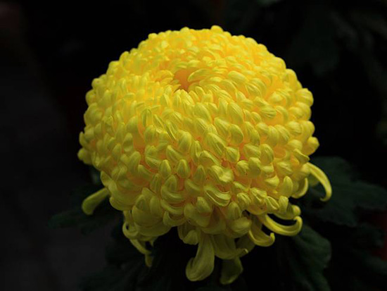 花卉种子供应