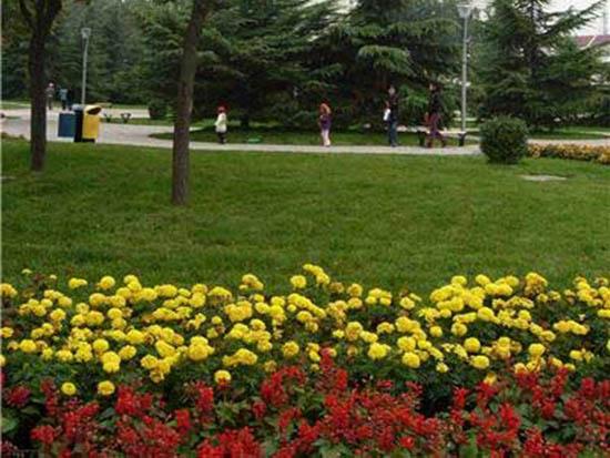 景观花卉培育