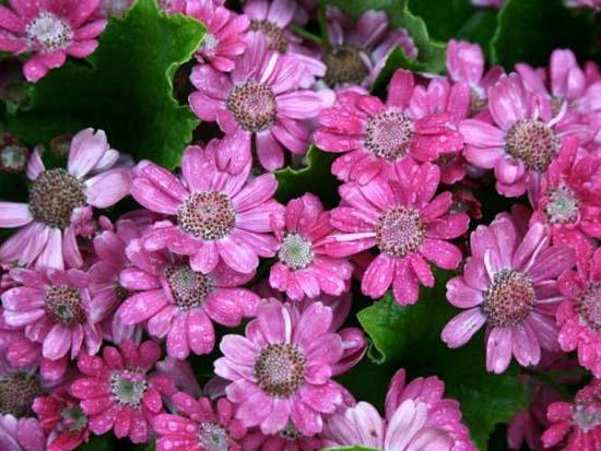 郑州景观花卉求购