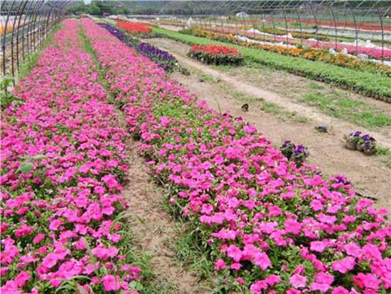 郑州景观花卉供应