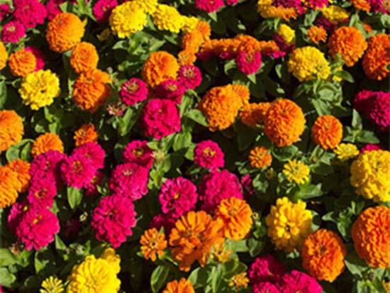 郑州草花种苗