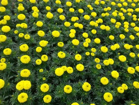 郑州景观花卉