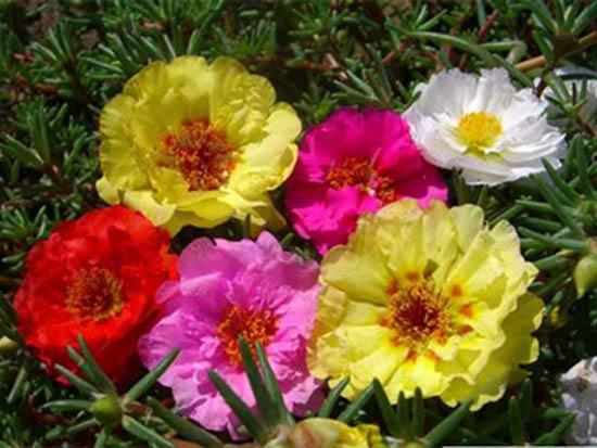 河南景观花卉