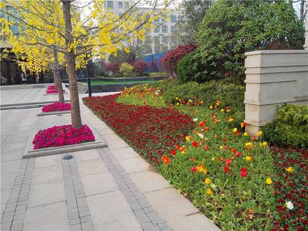 河南景觀花卉供應