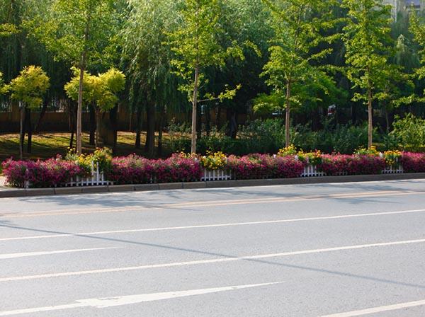 河南景�^花卉植物