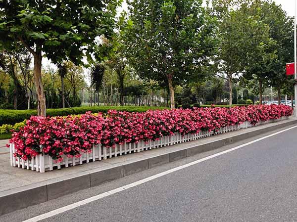 市政景观花卉