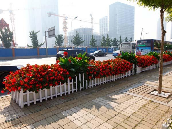 河南景觀花卉作用