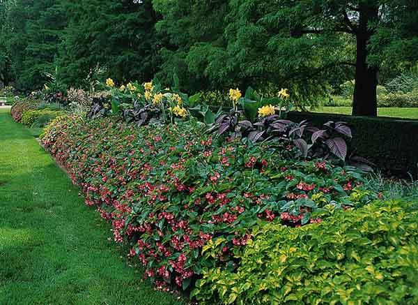 景观花卉供应