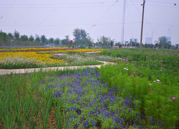 景区景观花卉