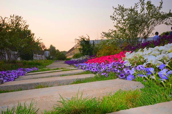 花卉景觀品種