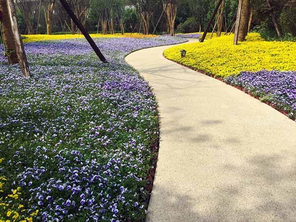 花卉花坛设计
