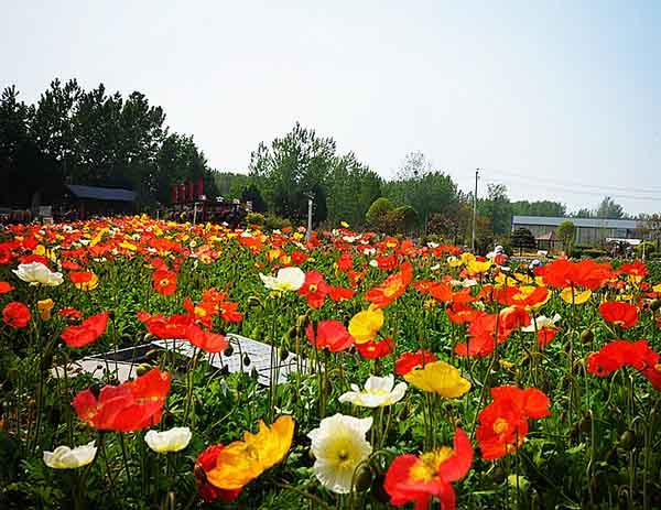 河南花卉花坛