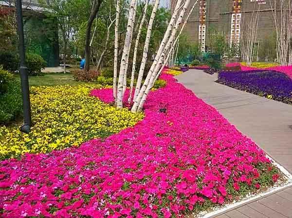 花卉花坛有哪些