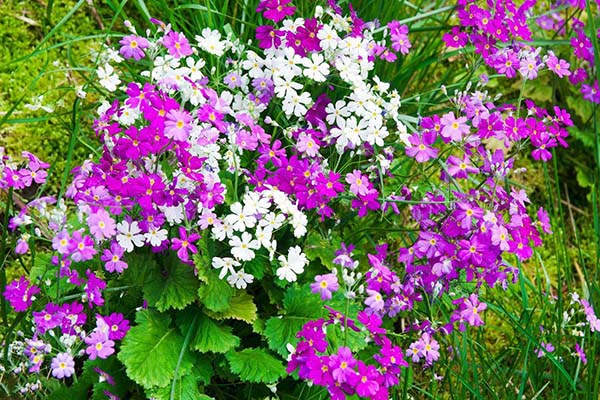 花卉景观厂家