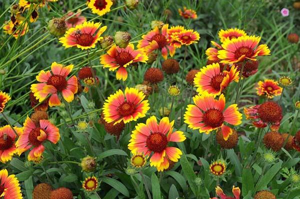 景觀花卉設計