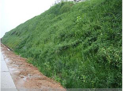 植生生态混凝土施工