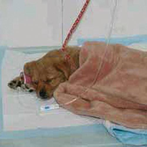 遵义24小时宠物医院
