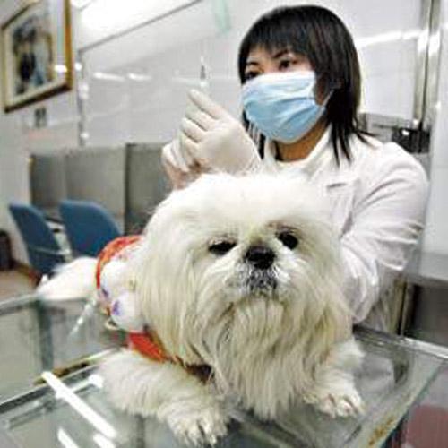 遵义专业宠物诊所
