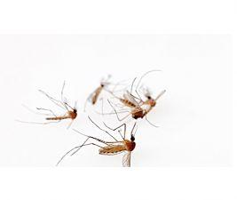 武汉专业灭蚊子